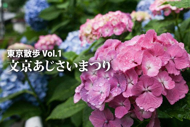 2017-06-13-ajisai-top