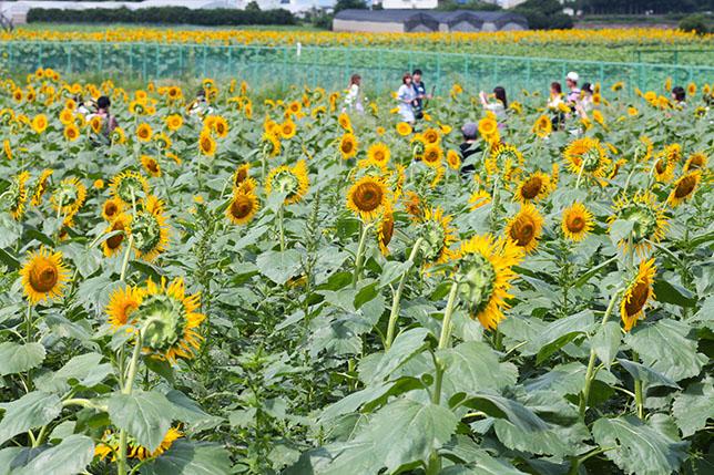 2017-08-24-himawari-5