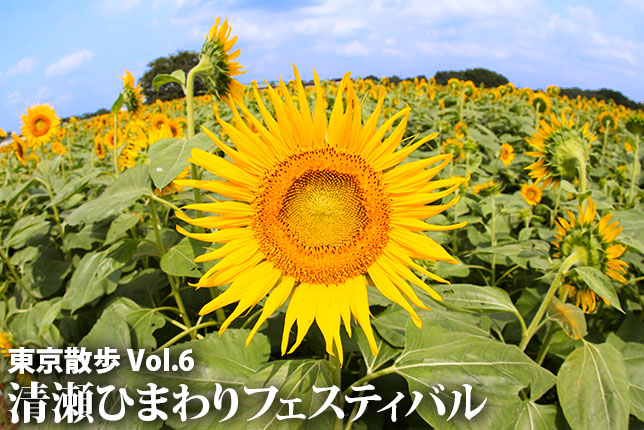 2017-08-24-himawari-top2